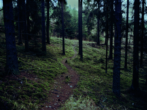 forest 001